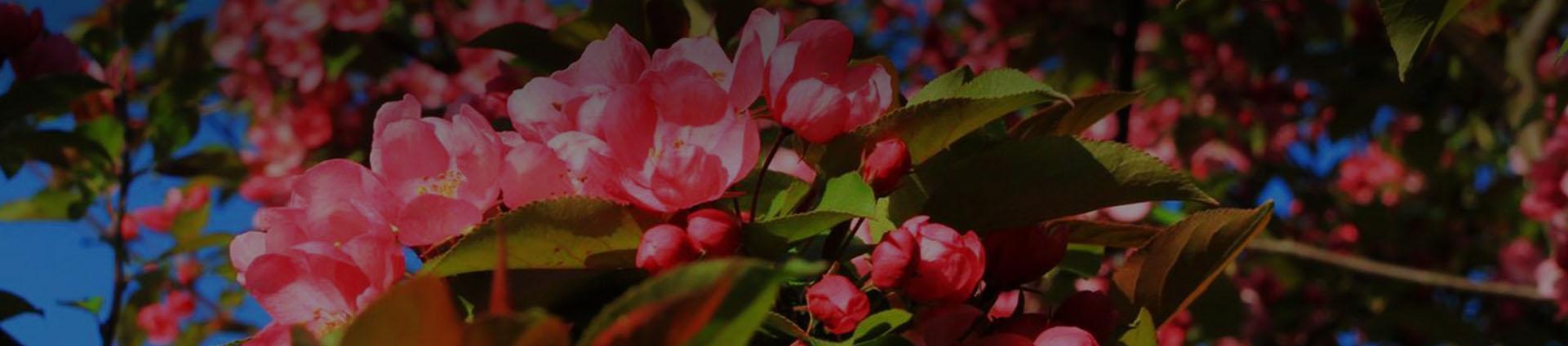 Rozkwitnięte kwiaty